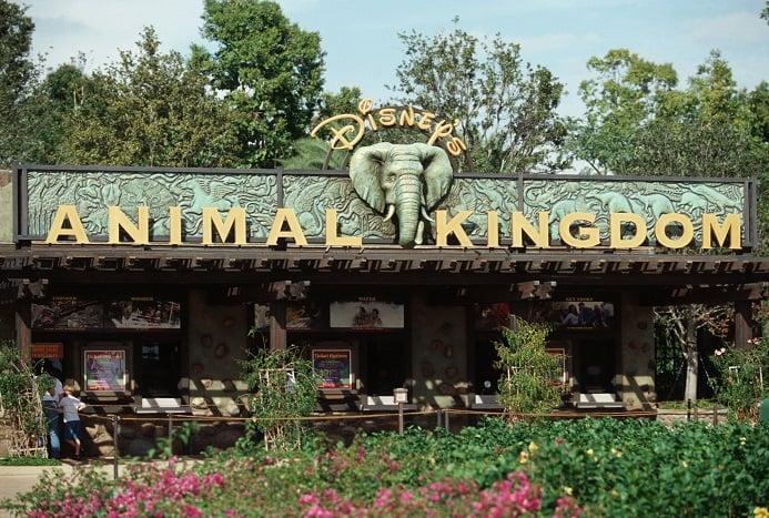 Resultado de imagem para animal kingdom orlando