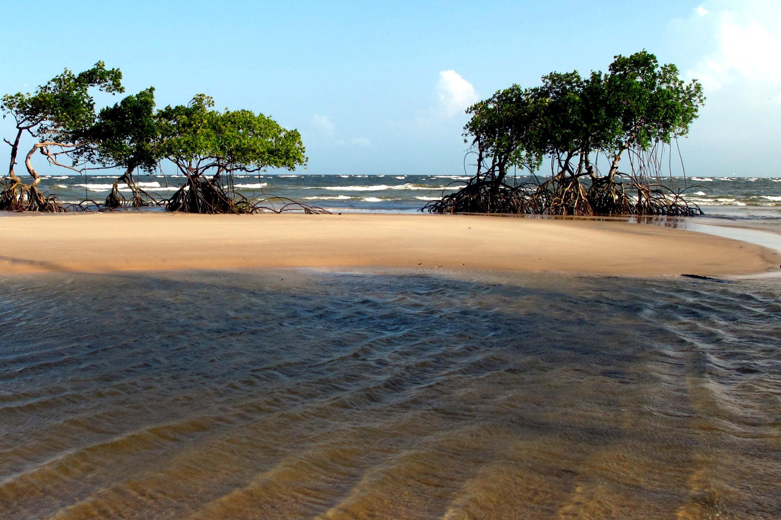 Lugares Para Viajar No Brasil Ilha De Marajo